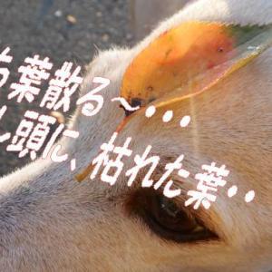 臭ちゃい×2💩犬のフン放置はダメだめ~新犬の後始末表示&かめむちーちゃん&インフル&皮ごとブドウ