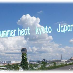 雑草の活用(腐草土)&メダカちゃんのその後⛅Summer heat kyoto Japan