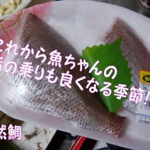 🐟鯛のアクアパッツアと翌日のパスタがウマウマ~・・・!「男の料理」
