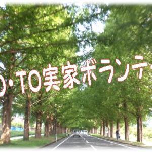 GO/TOコロナ渦渋滞裏目の裏目🚙ちかれたび~(笑)・・10月のコロナの動きがきになるなぁ~