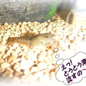 電気の理念・福島原発汚染水(トリチュウム)やっぱり海へ放出されるの~約束破り&弁当を定食に!