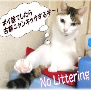 ポイ捨て足キックにゃん!・・あ缶!・・気持ち悪い~ポイ捨て~ No Littering!