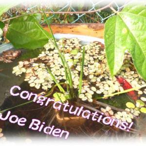 バイデンさん勝利で未来の環境も期待出来るかな🌱Congratulations! Joe Biden&高校生ボランティア
