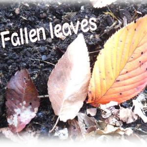 落ち葉と私、🍂そしてミミズちゃん・・・人類と植物と生き物に欠かせない生き物&ザリガニ・・・・