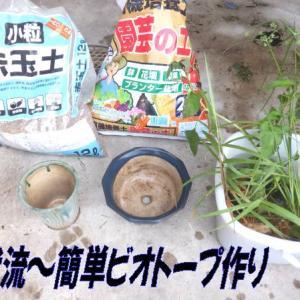 ビオトープの簡単な作り方!(我流)夏休みの勉強に!と河川工事の水辺の植物の大切さ!