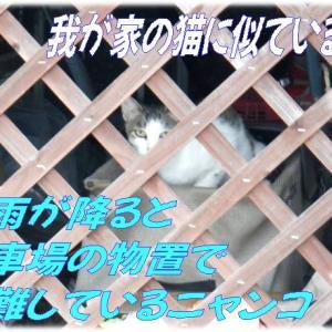 大雨で😼野良猫ちゃん物置に避難&河川公園水が引いてヘドロ無し&アクセスドッカン~