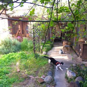 新緑の中庭と週末ブランチ。
