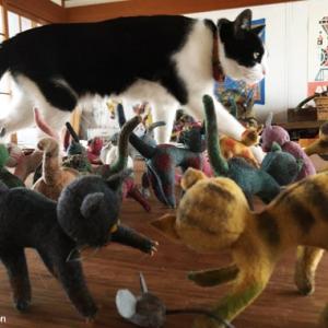 ねこ、ネコ、猫!〜離れのアトリエより〜