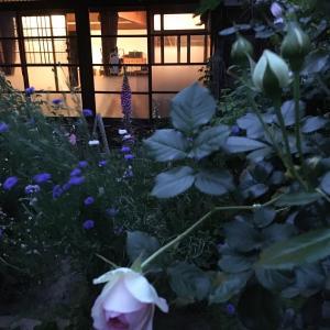 夕暮れ時の古民家のバラ。
