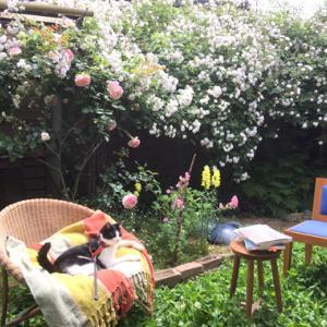 バラと猫と庭読書。