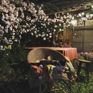 夜の薔薇の庭で。