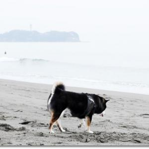 浜辺でお散歩