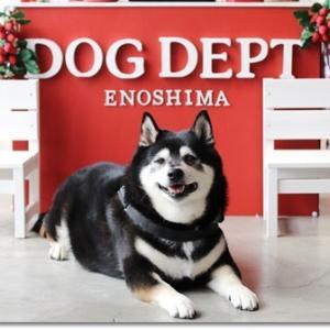 海とセット de DOG DEPT + CAFE