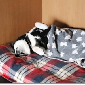 お誕生旅行 in 犬宿 しらくらの朝