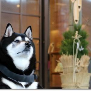 年越しは犬と一緒に温泉へ
