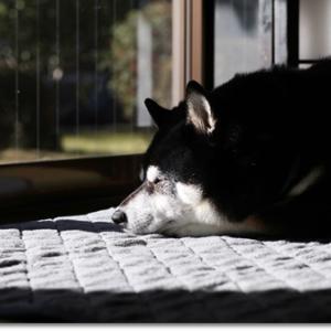 犬と過ごす令和二年 元日の朝
