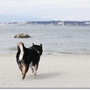 参拝からの海岸散歩