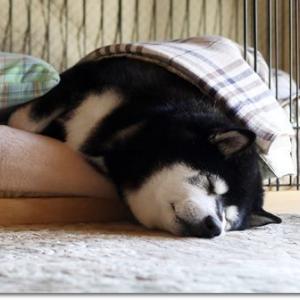 散歩後の二度寝