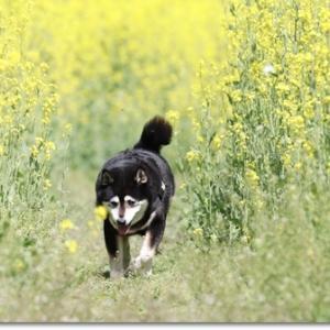 春色 花散歩