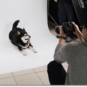 黒(白)犬に特化したフォトスタジオ