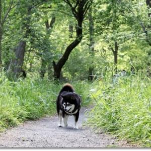 新緑のロング散歩