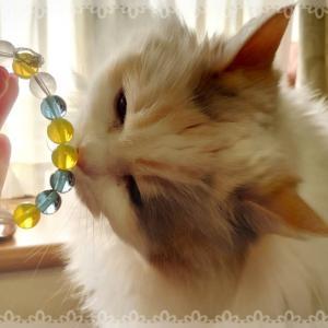 「猫にブレスを近づけてみたら・・・」お客様の感想
