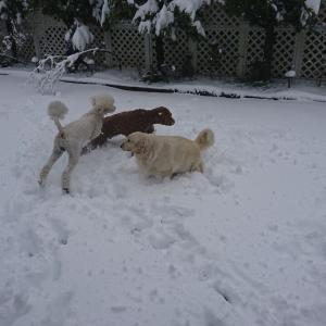 雪・雪・雪!‼️