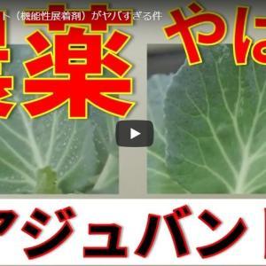 花王が食用野菜に高濃度の農薬野菜に一役 国民は高濃度の農薬が含まれた野菜を摂取することに!