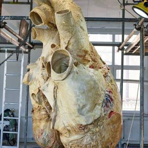 クジラの心臓でかすぎワロタ
