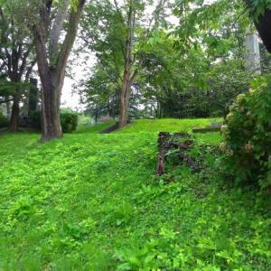 雨上がりの鮮やかな緑@青葉城三の丸