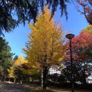 榴岡公園の紅葉がちょうど見ごろです。