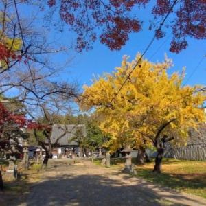 「陸奥国分寺跡」薬師堂の紅葉