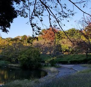 錦色の秋を楽しむ〜