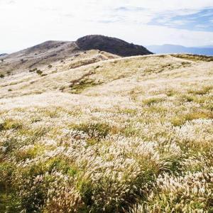 壮大なススキ畑で力強い秋を感じるなら!