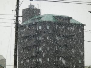 昨日の東京桜開花日は雪