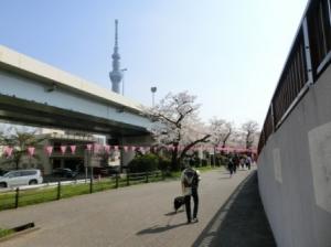 お花見。隅田川。