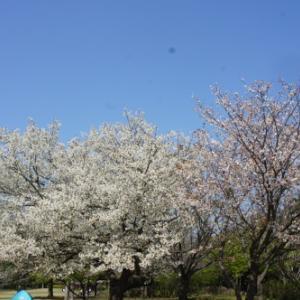 【お花見*公園】