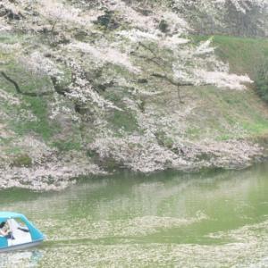 【千鳥ヶ淵(東京都千代田区) 花筏】