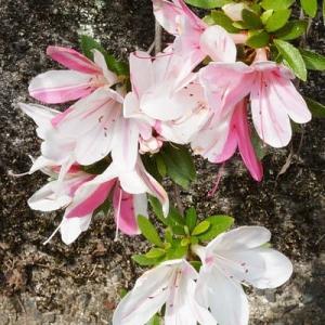 今咲いてる花