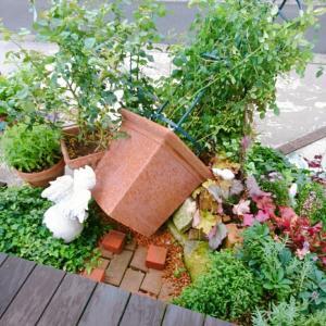 大きな鉢植え