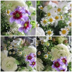 日比谷花壇の花♪