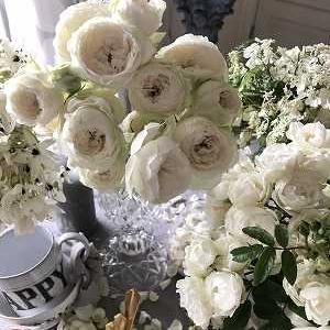 清楚なホワイトの薔薇&アンティークレース