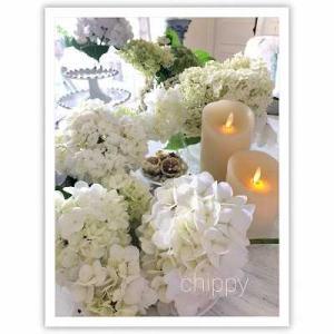 ホワイトの紫陽花♪