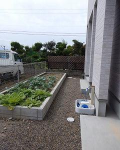 家庭菜園からの収穫