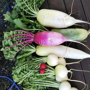 色とりどりの野菜❗️