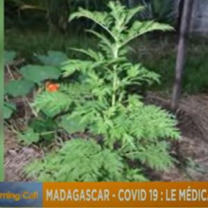 マダガスカルの『アサギリ草』をめぐって