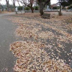 年末 多磨霊園墓地手入れ