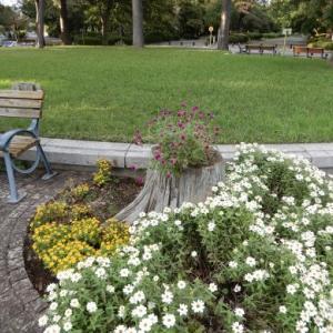 多磨霊園花壇の様子