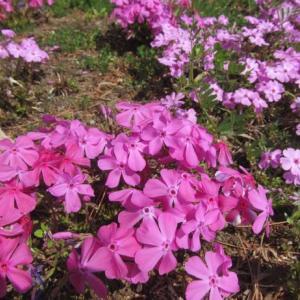 桜の時期のお墓参り代行