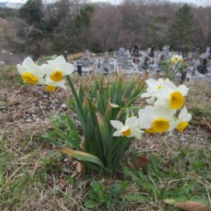 津田山霊園掃除